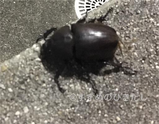 f:id:suzume-hikidashi:20180828211211j:image