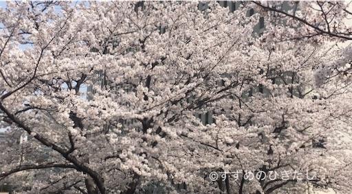 f:id:suzume-hikidashi:20190331225808j:image