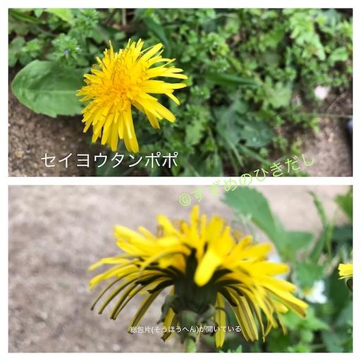 f:id:suzume-hikidashi:20190430195513j:image