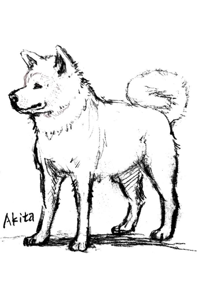 秋田犬カット Suzumeのブログ