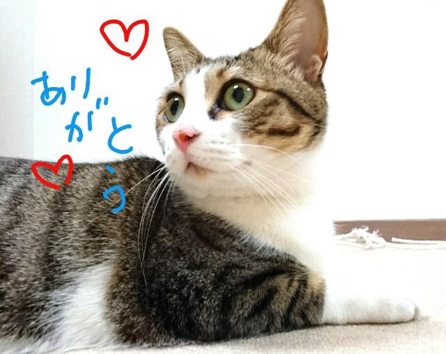 f:id:suzumenohakama:20180406114741j:image