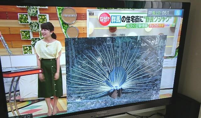 f:id:suzumenohakama:20180524123539j:image