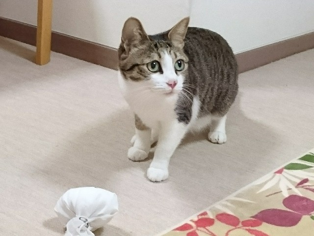 f:id:suzumenohakama:20190329231123j:image
