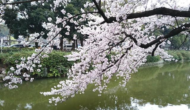 f:id:suzumenohakama:20190331074610j:image