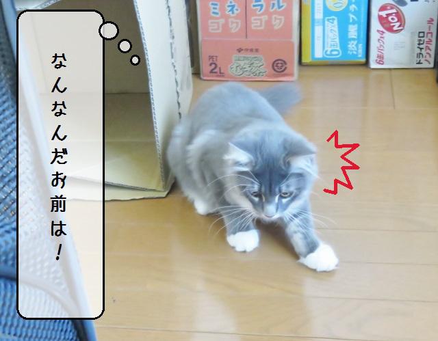 f:id:suzumesuzume:20180920140900j:plain