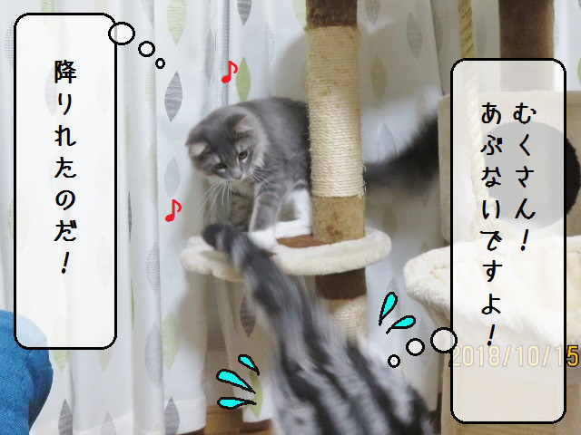 f:id:suzumesuzume:20181017165014j:plain