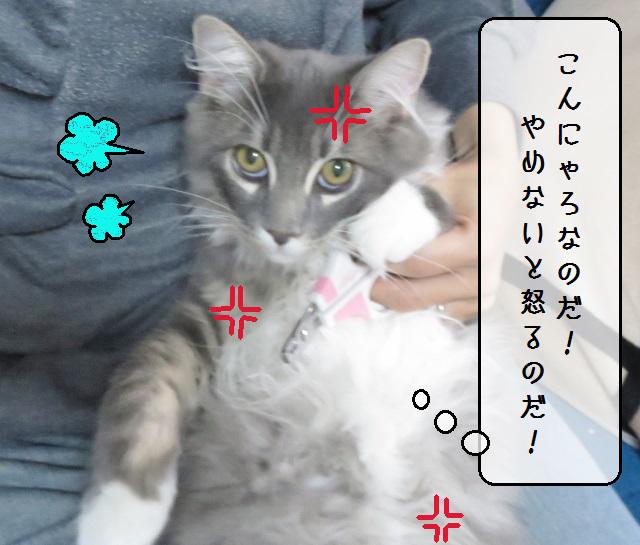 f:id:suzumesuzume:20181023133903j:plain