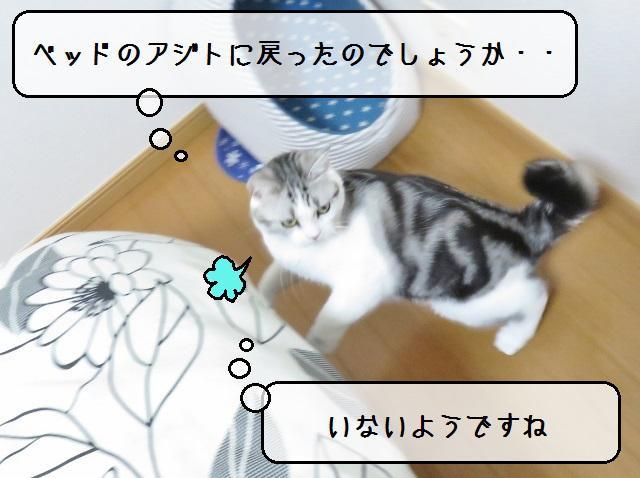 f:id:suzumesuzume:20181101142114j:plain