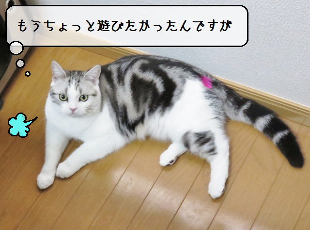 f:id:suzumesuzume:20181101142200j:plain