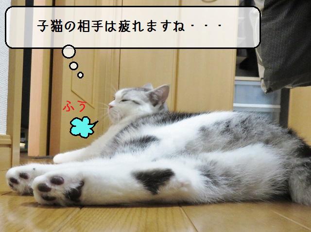 f:id:suzumesuzume:20181101142609j:plain