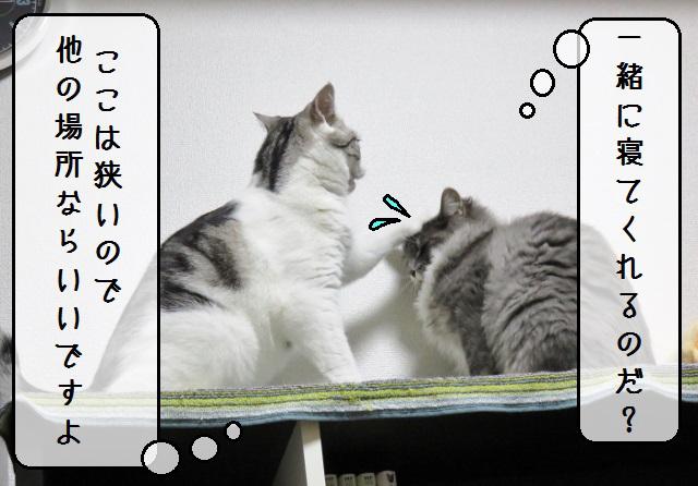 f:id:suzumesuzume:20181120161348j:plain
