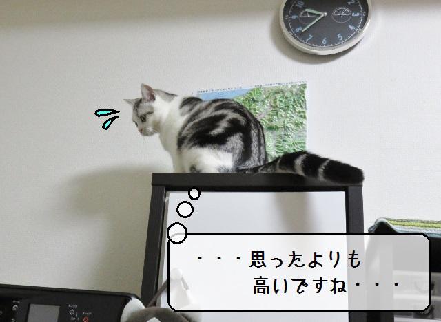 f:id:suzumesuzume:20181120161448j:plain