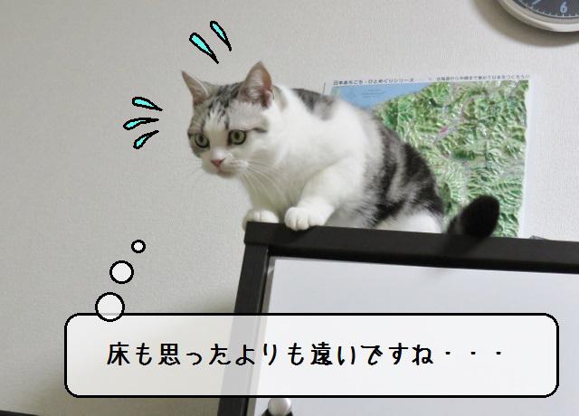 f:id:suzumesuzume:20181120161519j:plain