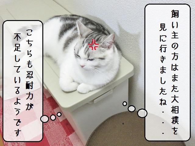 f:id:suzumesuzume:20181126154315j:plain
