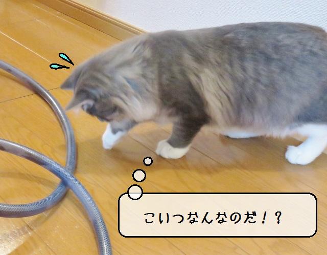f:id:suzumesuzume:20181127151248j:plain