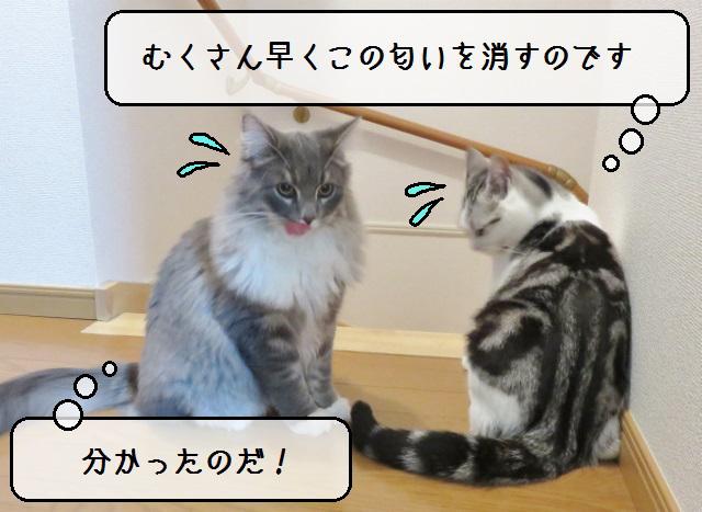 f:id:suzumesuzume:20181213125916j:plain