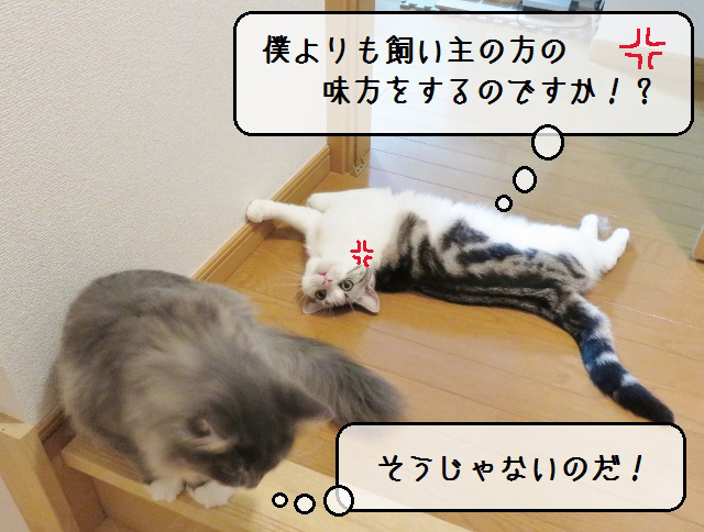 f:id:suzumesuzume:20181213130034j:plain