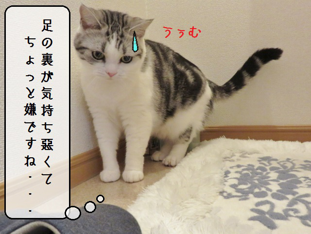 f:id:suzumesuzume:20181214191338j:plain