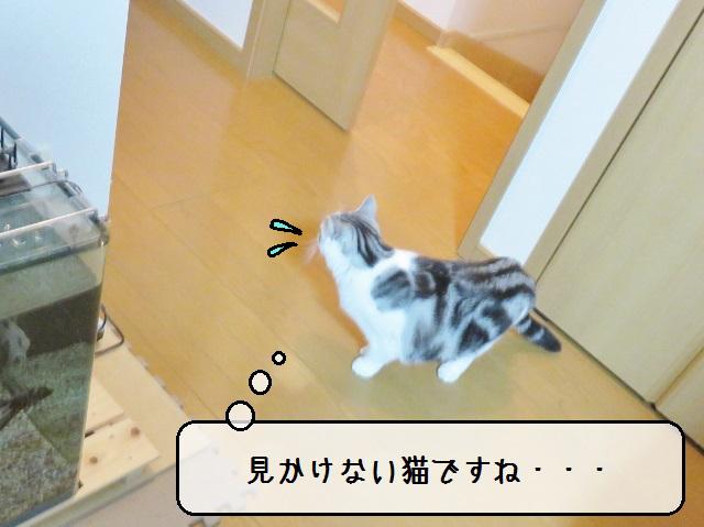 f:id:suzumesuzume:20181217172046j:plain