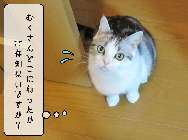 f:id:suzumesuzume:20181217172144j:plain