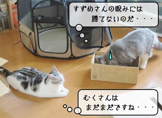 f:id:suzumesuzume:20181218155103j:plain