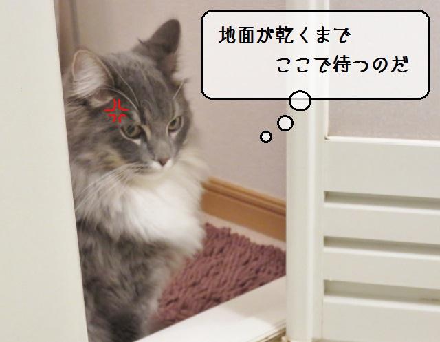 f:id:suzumesuzume:20181226211945j:plain
