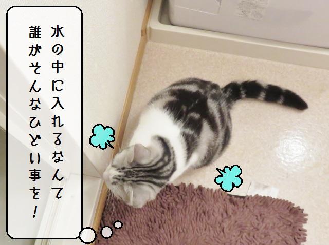 f:id:suzumesuzume:20181226212048j:plain