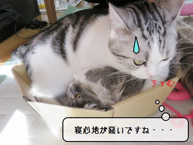 f:id:suzumesuzume:20190110142833j:plain