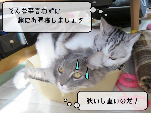 f:id:suzumesuzume:20190110142937j:plain