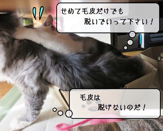 f:id:suzumesuzume:20190110143056j:plain
