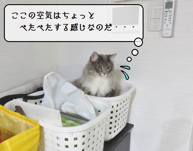 f:id:suzumesuzume:20190117153724j:plain
