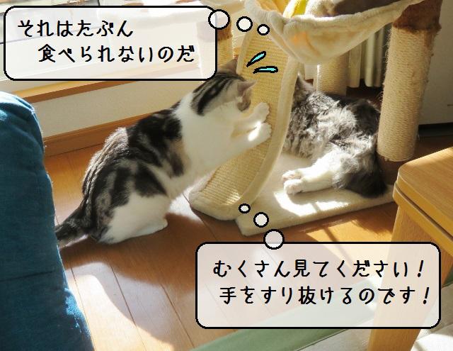 f:id:suzumesuzume:20190123185745j:plain