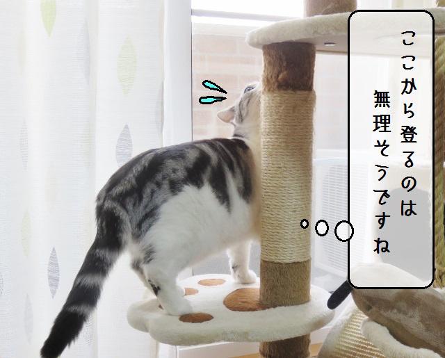 f:id:suzumesuzume:20190131144416j:plain