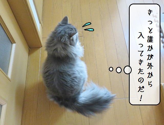 f:id:suzumesuzume:20190201201136j:plain