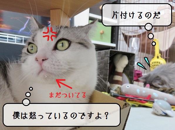 f:id:suzumesuzume:20190201201226j:plain