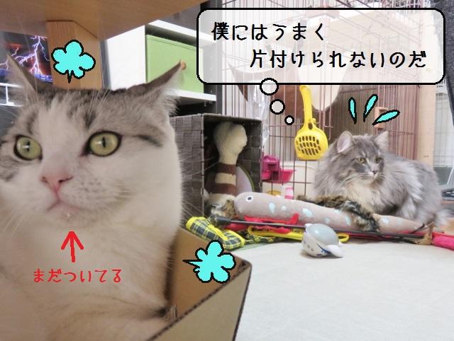 f:id:suzumesuzume:20190201201233j:plain
