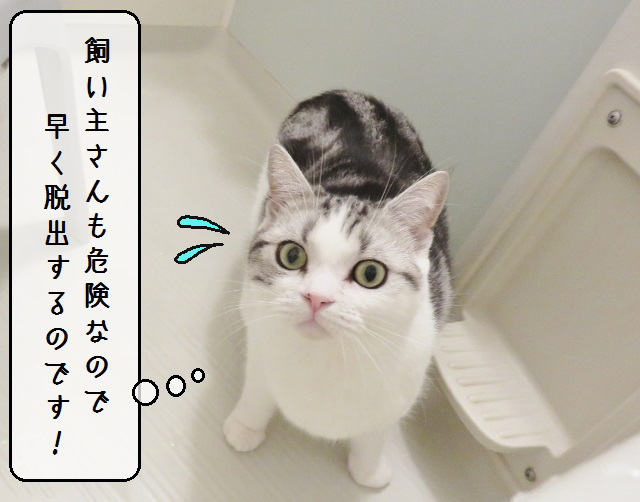 f:id:suzumesuzume:20190207143958j:plain