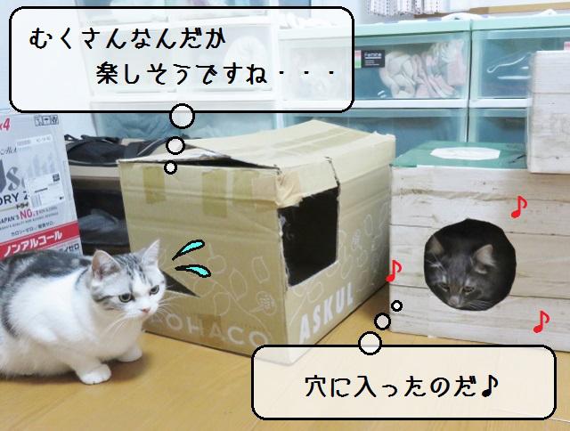 f:id:suzumesuzume:20190212152657j:plain
