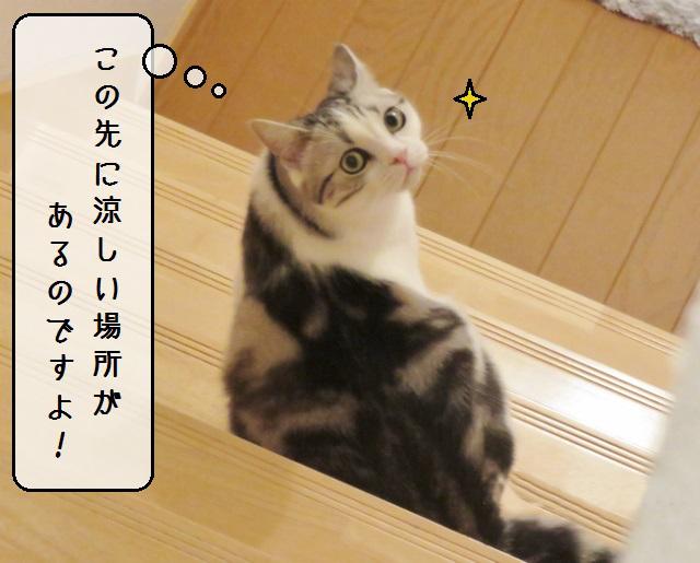 f:id:suzumesuzume:20190213143534j:plain