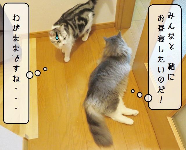 f:id:suzumesuzume:20190213143616j:plain
