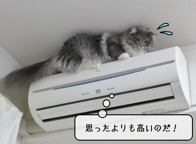 f:id:suzumesuzume:20190215214503j:plain