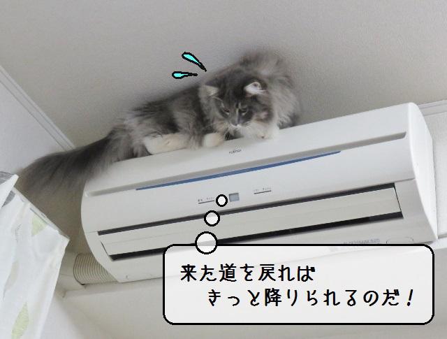 f:id:suzumesuzume:20190215214524j:plain
