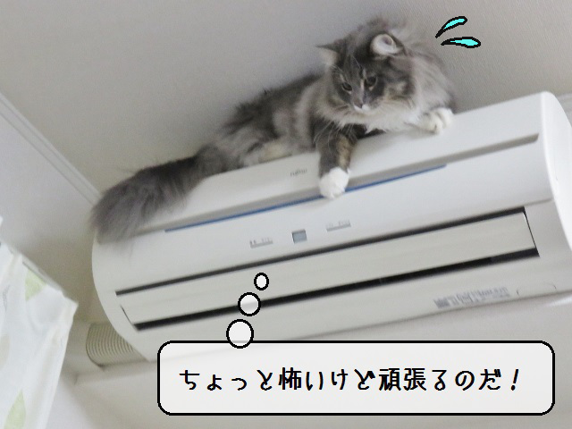 f:id:suzumesuzume:20190215214532j:plain