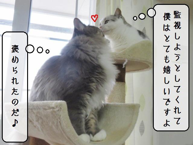 f:id:suzumesuzume:20190218153312j:plain