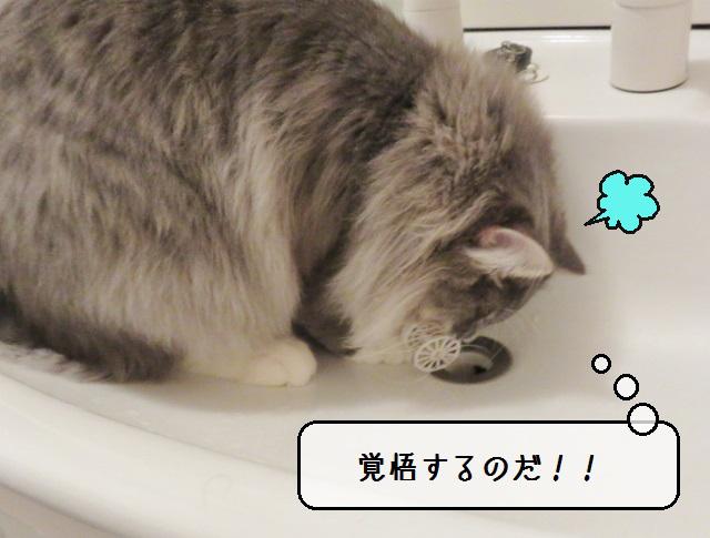 f:id:suzumesuzume:20190220142005j:plain