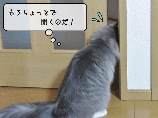 f:id:suzumesuzume:20190226152157j:plain