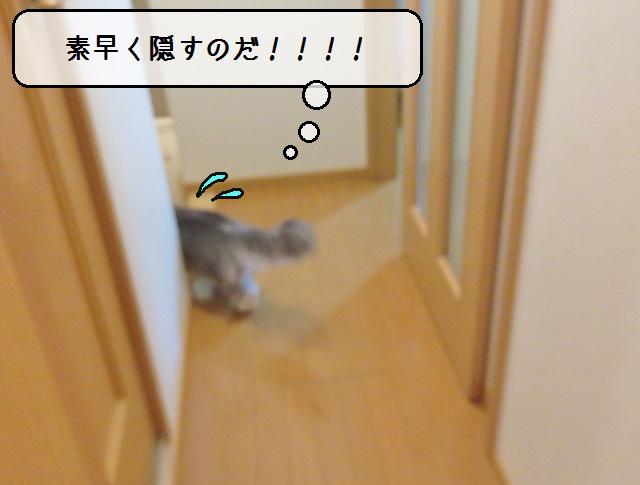 f:id:suzumesuzume:20190226152316j:plain