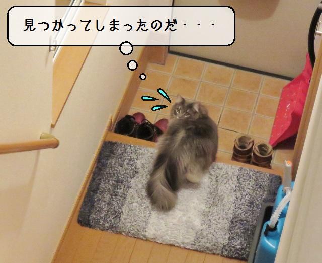 f:id:suzumesuzume:20190226152321j:plain