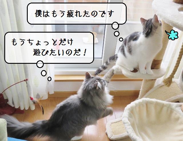 f:id:suzumesuzume:20190227153737j:plain