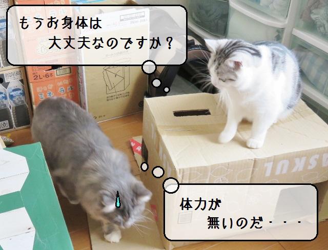 f:id:suzumesuzume:20190404125102j:plain